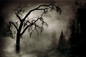 black-mist-tree