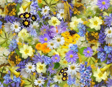 flowers-colorful-plants-bloom-68507
