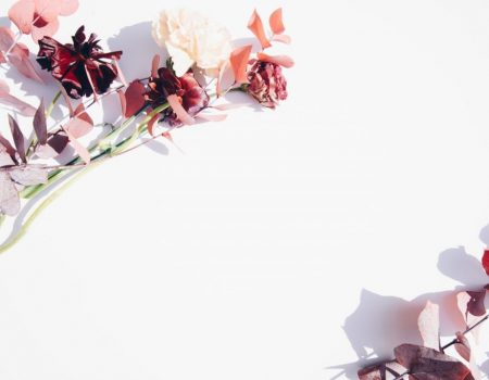 pink-and-white-flowers-on-white-wall-2395249