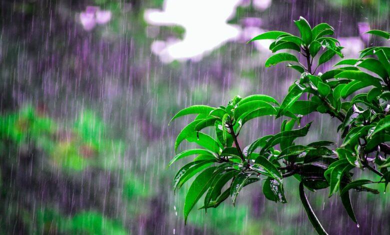 liječenje kišom